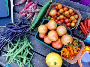 Veg4Reading harvest