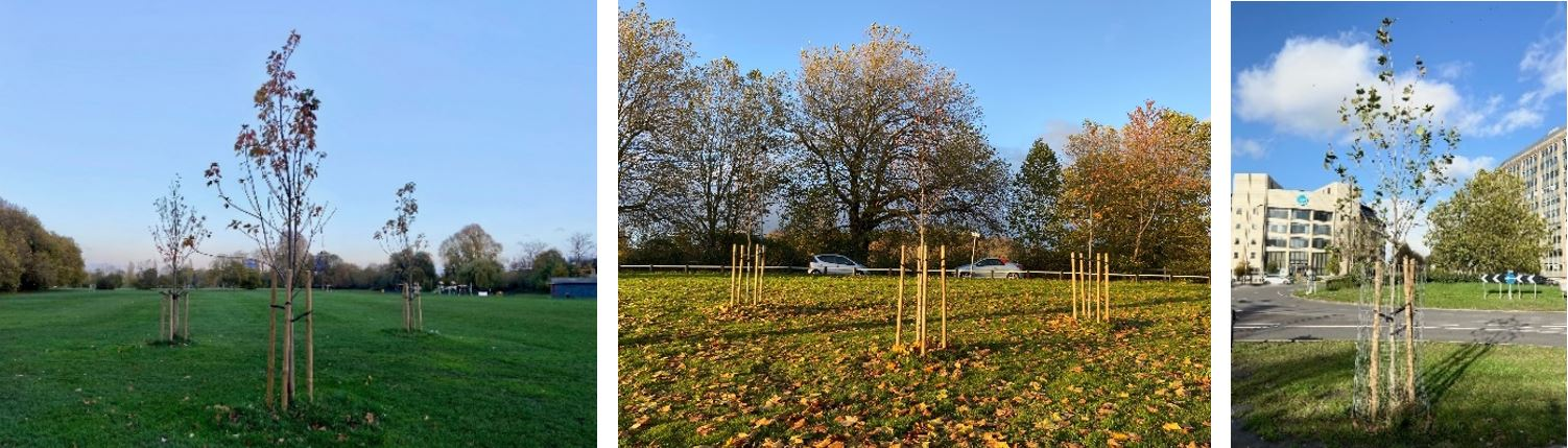 The first seven tree funded by Thames Lido