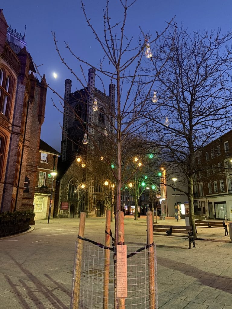 Rooted in Reading tree at Christmas